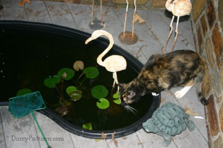 The fish pond is used by our outdoor cat for drinking water. Notice the toads in the lower left corner.