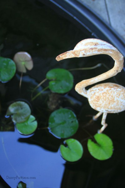 The Flamingo's eye view of the pond and the toads.