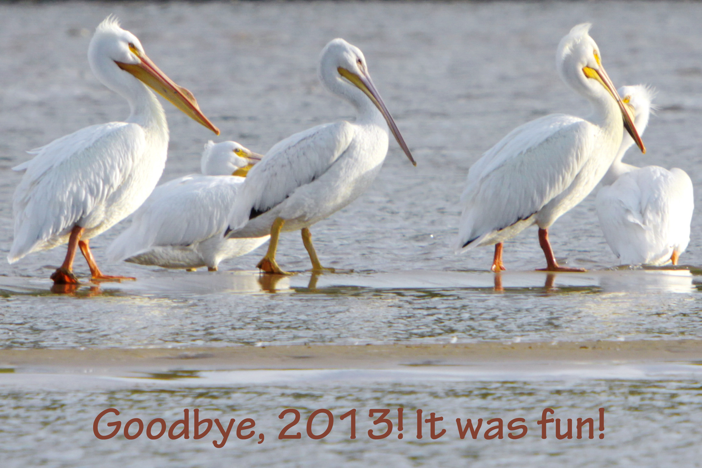 c. Dwight Pattison. My favorite picture that my husband took this year. Pelicans along the Arkansas River
